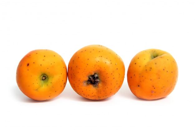Tecojote-winterfrucht crataegus pubescens-stipulacea