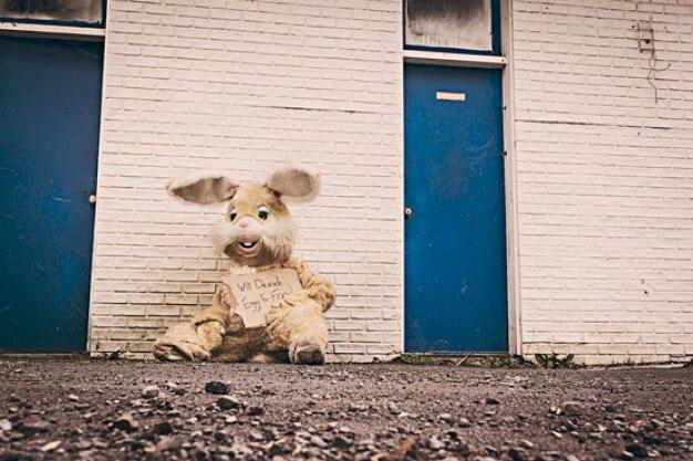 Teddy kaninchen fragen für lebensmittel
