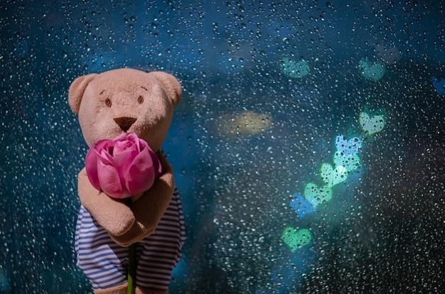 Teddybär, der mit einer rose am fenster steht, wenn er mit bunten liebesform-bokeh-lichtern regnet.