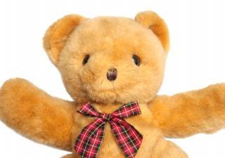 Teddybären teddy