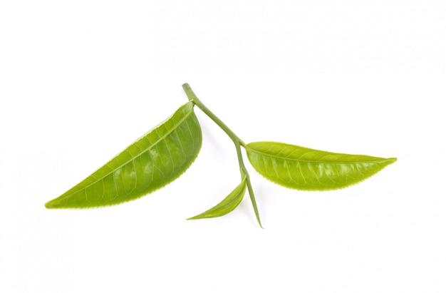 Teeblatt auf weiß isoliert