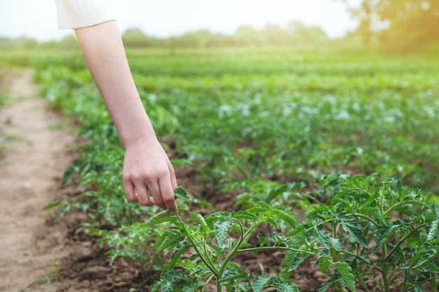 Teen mädchen berührt hände mit grünen pflanzen im garten