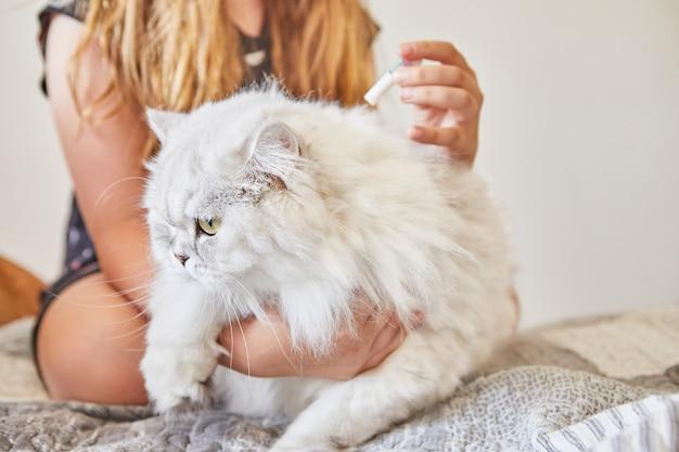 Teenager-mädchen tropft floh- und zeckentropfen auf langhaarige britische weiße katze.