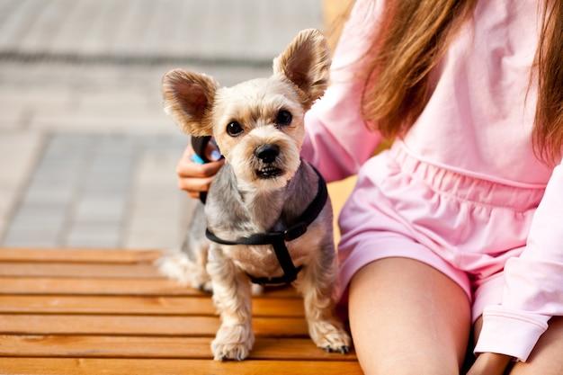 Teenager-mädchen umarmt kleinen hund in einem park im freien auf der bank sitzend