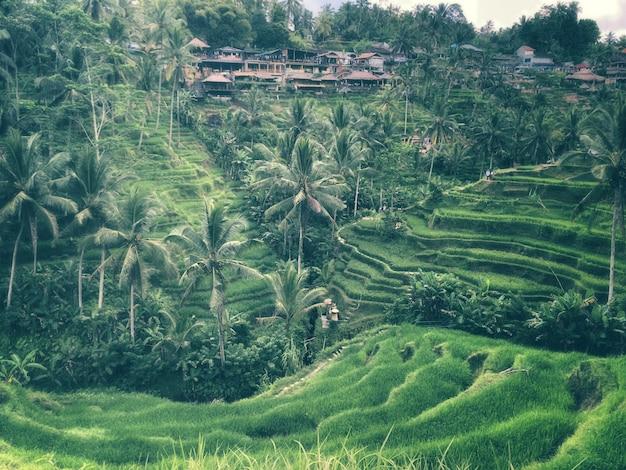 Tegallalang-reisterrasse, ubud, bali - indonesien