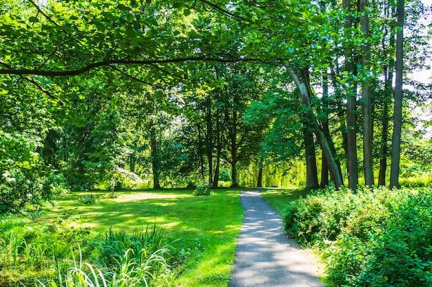 Teich, grüne bäume und gehweg im summer city park.