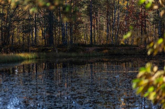 Teich mit laub im wald im frühherbst