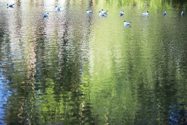 Teich mit wasserlinsen, sumpfpflanzen, seerosen und victoria amazonica lilien