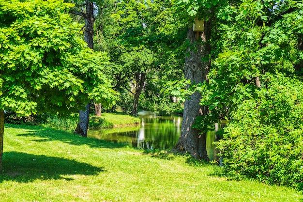 Teich und grüne bäume im sommer-stadtpark.