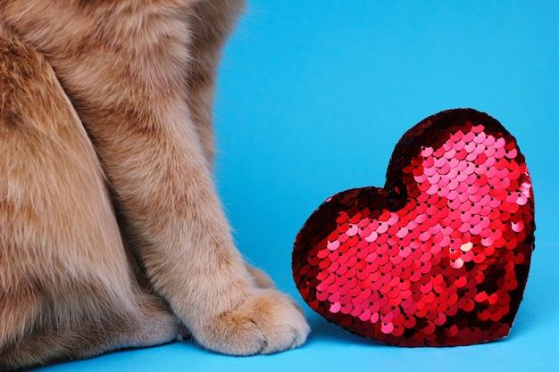 Teil einer roten katze, die nahe einem roten herzen mit pailletten sitzt. das konzept der liebe und des valentinstags. liebe für haustiere.