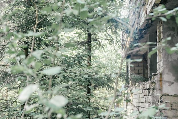 Teilweise verschwommener grauer beton und ziegelmauer eines verlassenen zerstörten gebäudes, das mit bäumen, büschen und ästen überwuchert ist
