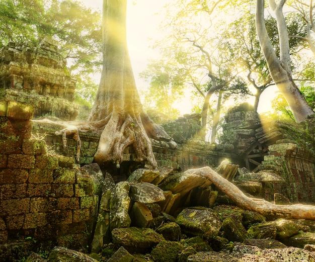 Tempel in angkor thom, kambodscha
