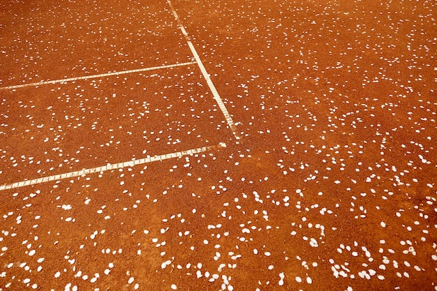 Tennisball auf einem sandplatz. tennisplatz in der nähe von blühendem apfelbaum mit blütenblättern auf dem boden. tennisspiel