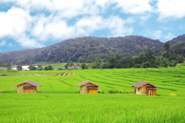 Terassenförmig angelegte reisfelder und drei hütten im norden von thailand bewirtschaften die landwirtschaft