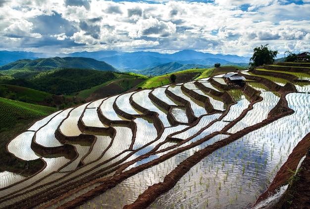 Terassenförmig angelegtes reisfeld in chiangmai thailand