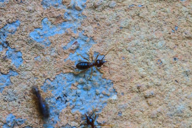 Termiten, die das haus essen
