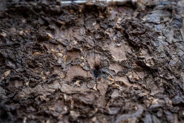 Termiten fressen das holz des hauses.