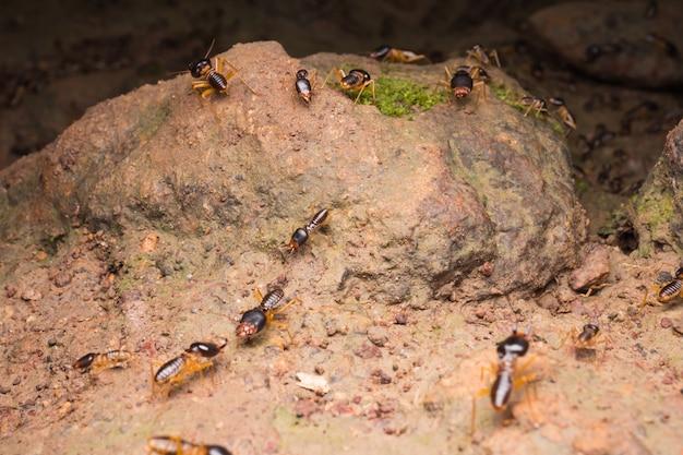 Termiten oder weiße ameisen auf dem boden im regenwald