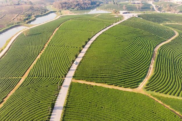 Terrassenförmig angelegte plantage des grünen tees der landschaft auf hügel