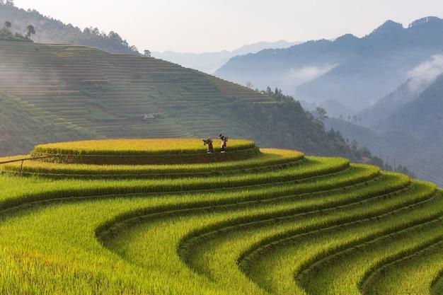 Terrassenförmig angelegte reisfeldlandschaft von mu cang chai, yenbai, nordvietnam