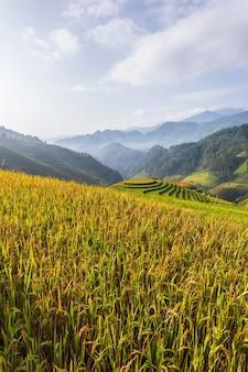 Terrassenförmig angelegte reisfeldlandschaft von mu cang chai