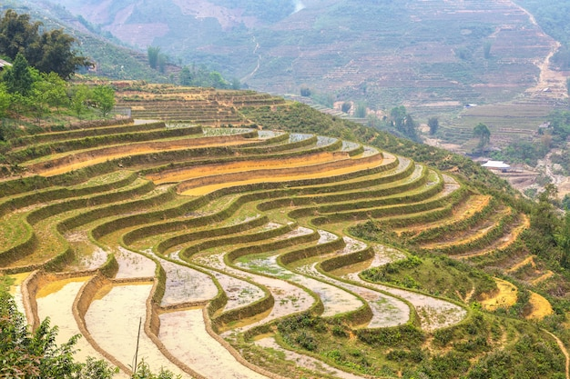 Terrassenförmig angelegtes reisfeld in sapa, vietnam