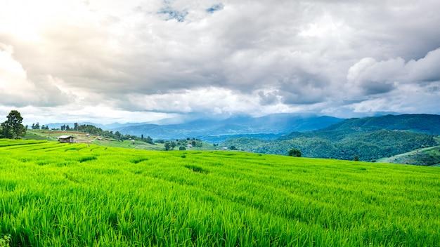 Terrassenförmiges grünes reisfeld in bewölktem tag, chaingmai, thailand
