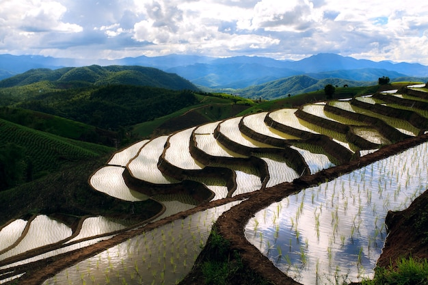 Terrassenförmiges reisfeld in chiangmai thailand