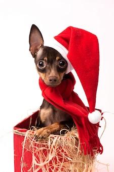 Terrierwelpe in einem roten weihnachtskasten.
