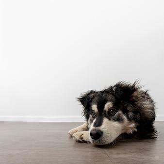 Textfreiraumhund zu hause, der auf boden sitzt