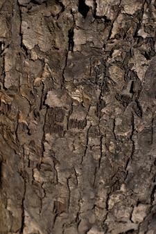 Textur aus der rinde eines alten apfelbaums