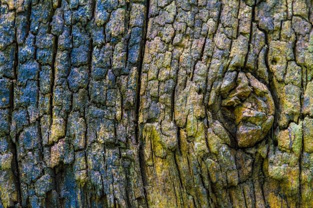 Textur aus rindenholz