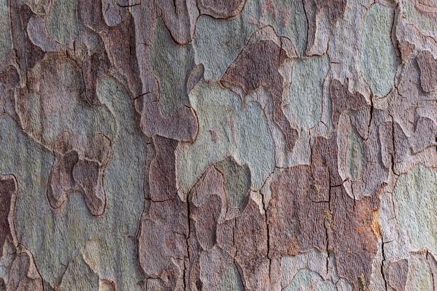 Textur der bergahorn-baumrinde