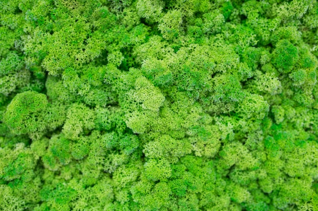 Textur der grünen umweltfreundlichen moos-nahaufnahme.