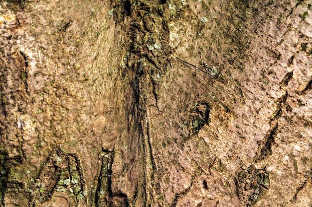 Textur der holzbaumrinde für hintergrund