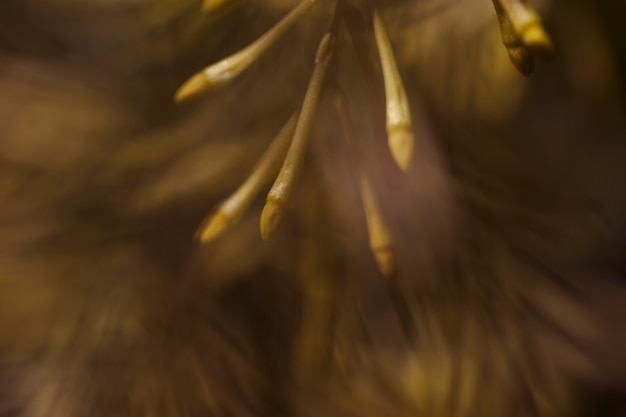 Textur der nahaufnahme pflanzen