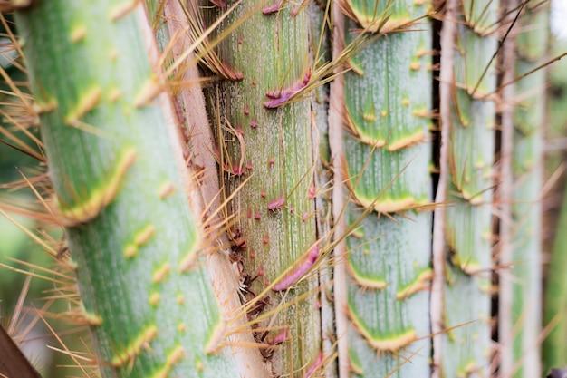 Textur der palme.