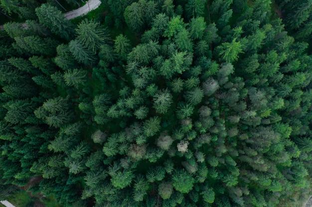 Textur der waldansicht von oben, luft von oben luft, panoramafoto über den spitzen des kiefernwaldes