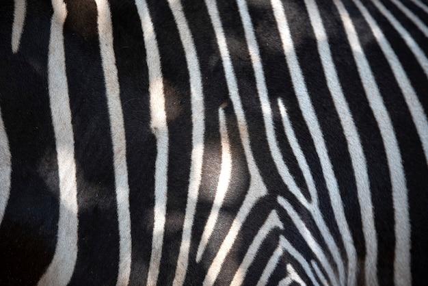 Textur der zebrahaut