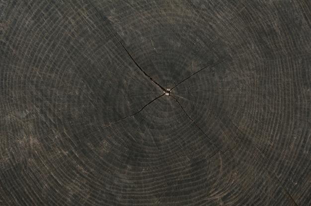 Textur des alten stumpfes