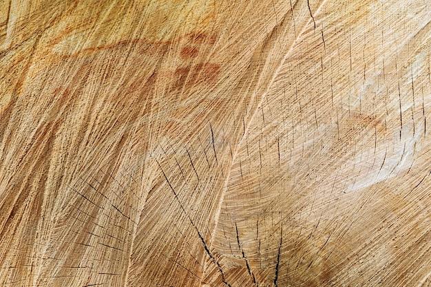 Textur des baumstumpfes. querschnitt des baumes. hintergrund.