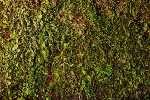 textur des bodens mit pflanzen kostenlose foto