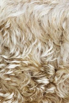Textur des fells, makrofarbener schafshaarhintergrund, natürliche flauschige wolle, pelzige oberfläche, farbe bringen