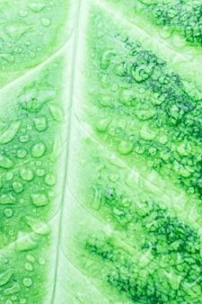 Textur des grünen blattes