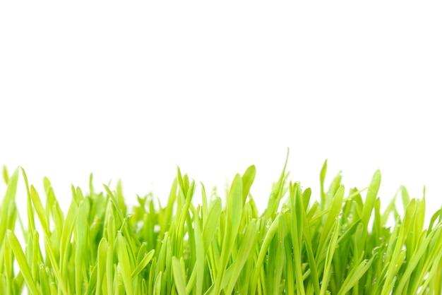 Textur des grünen grases isoliert auf weißem hintergrund. pflanze mit wassertropfen