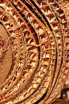 Textur des schnitts des bananenbaumstamms - natürlicher pflanzenhintergrund