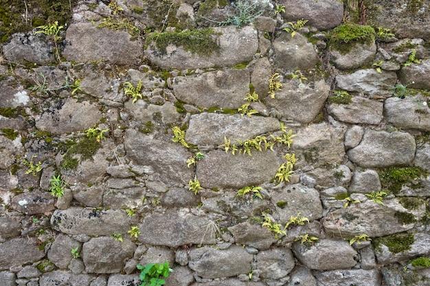 Textur einer steinmauer mit gras