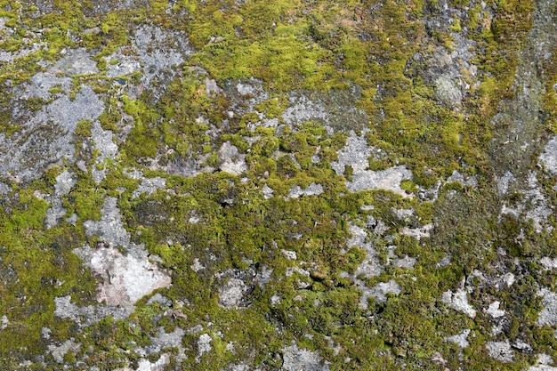 Textur einer steinmauer mit moos