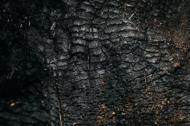 Textur einer verbrannten baumrinde