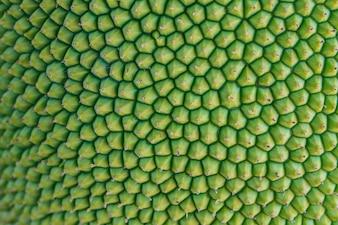 Textur Jackfrucht Peel haben Dorn
